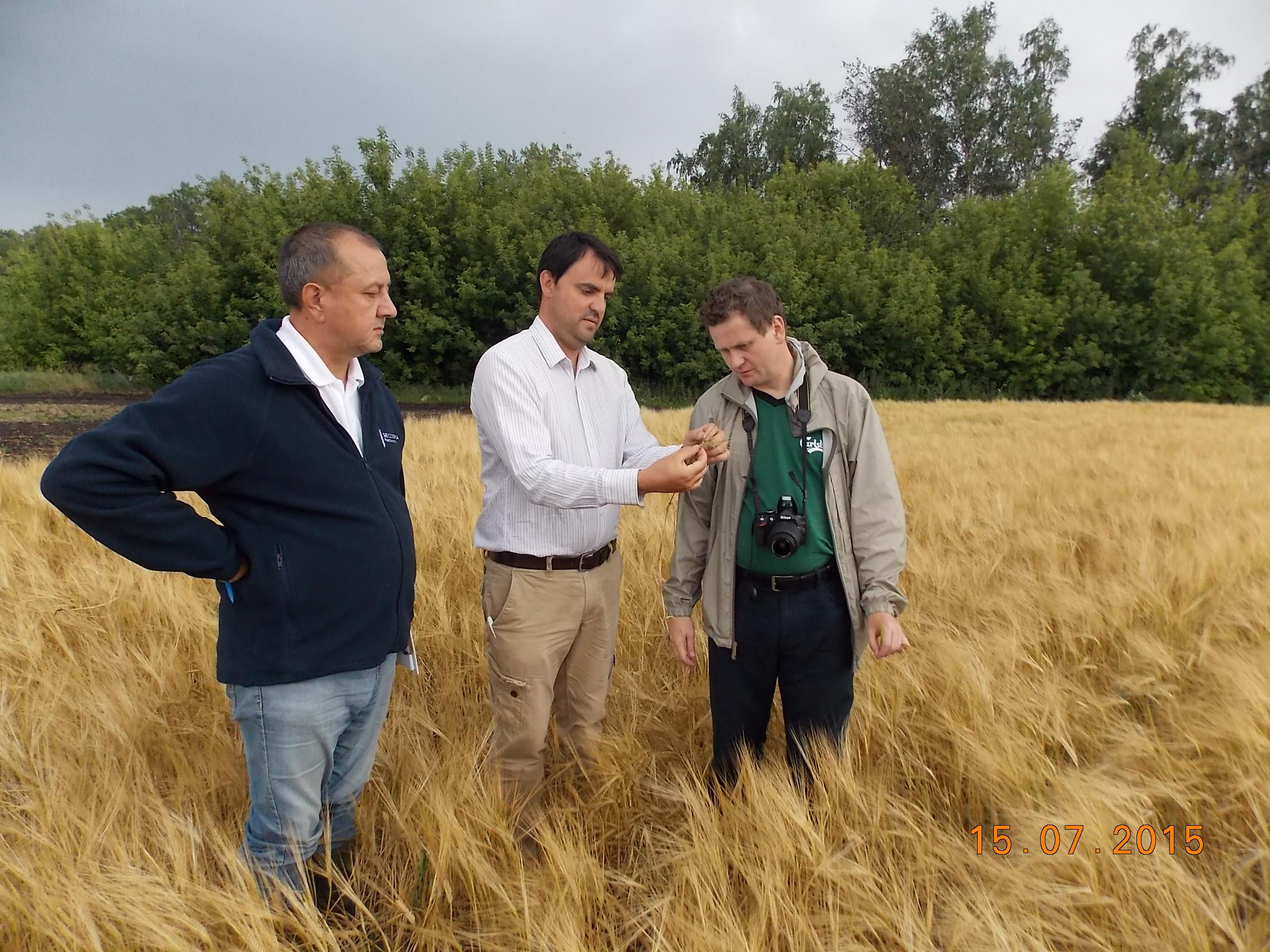 Консультации французких специалистом по пивоваренному ячменю на полях КВЕ